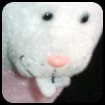 Dong Bunny