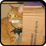 A cat in a box wearing a rubber bat, bARTer Sauce